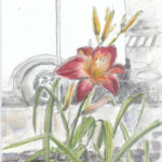 """day lily in the city"" watercolor, water-soluble graphite, pencil"